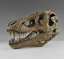 Natural History - Tyrannosaurus Rex Dinosaur Skull Museum Replica