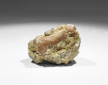 Natural History - Fossil Flipper Bone of a Marine 'Dinosaur'