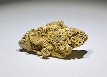Natural History - Fossil Corals in Limestone