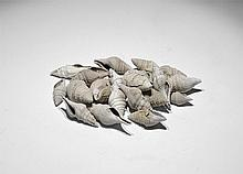 Natural History - Gastropod Fossil Group