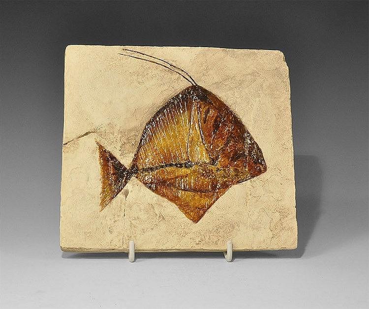 Natural history moonfish museum replica for Opah fish price