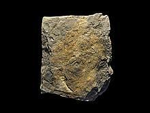 Natural History - Large Fossil Fern Slab