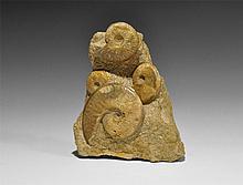 Natural History - Fossil Ammonite Display