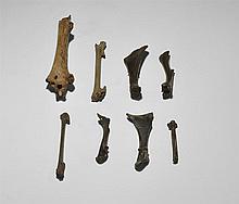 Natural History - Fossil Bird Bone Group