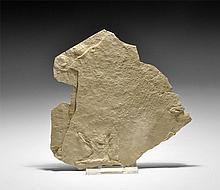 Natural History - Fossil Bird Footprint