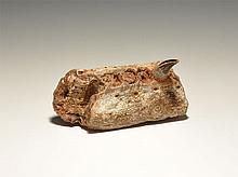 Natural History - Fossil Crocodile Mandible Section
