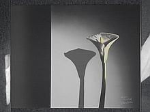 Artist Signed Proof Art Print Modern Flower White Lily