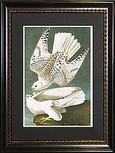White Gyrfalcons - John James Audubon Giclee