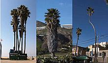 RUBSAMEN, GLEN Redondo. 2008. Blue Ray Video, 3 Sequenzen, jeweils 5 M