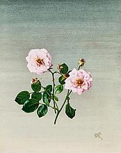 Dresden 1901 - 1927Pink-coloured Rose.