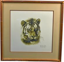 Detroit Tiger Drawing Lithograph in Gold Wood Frame