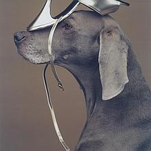 William Wegman (1943-), SHOE HEAD, 1994, Large scale polariod; signed, titled and dated in black ink lower margin., Image 23.5