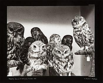 Laurence Aberhart Moreporks (Bird Skins Room #2),