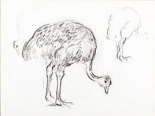 François Krige (South African 1913-1994) STUDY OF AN OSTRICH bears a stamp