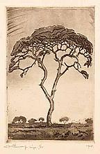 Jacob Hendrik Pierneef (South African 1886-1957) TREE etching, signed, numb