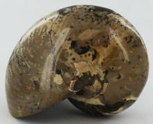 5950ct Natural Polished Fossilized Nautilus