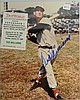 Ted Williams autographed 8