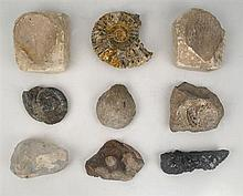 circa 150 million BC: Collection of fossils gathered in the North Kilkenny coalfields (35)