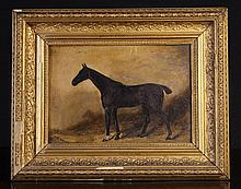 C. Rhodes. A Small Oil on Board: Black horse in stable, 8 ins x 11 ins (20 cms x 28 cms) in a moulde