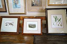 3 framed antique prints of Platypus, botanical, Geelong print by ST Gill