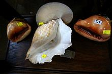 Collection of shells inc Conch shell