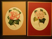 Camellias: Two Color Lithographs