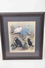A framed print of seabirds