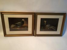 2 Framed Prints Of Pigeons