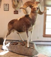 Vehicles, Taxidermy, Nostalgic Treasures & Online Furniture Auction