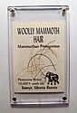 A lock of Woolly Mammoth Hair, Pleistocene Period