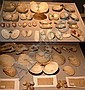 (49) VARIOUS SPECIMEN'S INCLUDING LAND SNAILS, OYSTERS AND COCKLES