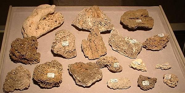 (18) VARIOUS SPECIMENS TUFA
