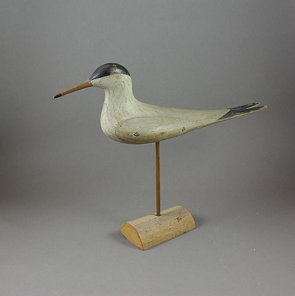 MARK MCNAIR TERN SHORE BIRD