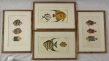 Exotic Tropical Fish Re Prints by N.Remond. Framed 18.5 x 12.5 inches. (4 Items)