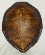 Large Antique Sea Turtle Shell. 19thc.  23.5 x 19 inches.