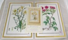 A pair of Royal Worcester Exclusive Botanical Plaques 'Salpiglossis' and 'Potentilla'.Decorated with 19th century hand coloured engravings. 7 x 10 inches.(2 Items) Complete with paperwork. 1st Quality.