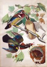 Audubon's Aquatints, Rare Maps & Watercolors