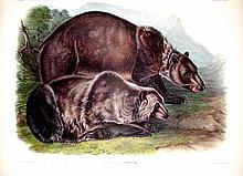 Grizzly Bear, Plate 131