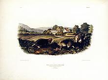Common American Shrew Mole, 10