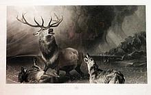 The Stag at Bay