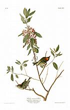 John James Audubon, Plate 195: