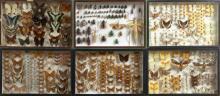 TROIS CENT NEUF INSECTES, LYCAENIDAE, PIERIDAE et divers de France et autres : 66 Insectes divers, Lycaenidae, divers Pieridae, 1 No...