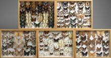 CENT SOIXANTE DIX NEUF PIERIDAE NYMPHALIDAE et divers d'Afrique :  Pieridae, Nymphalidae, Sphingidae…Dans cinq boîtes.