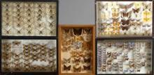DEUX CENT SOIXANTE DIX NEUF ZERYNTHIA spp. et divers de France ou d'Europe : 33 Zerynthia spp. et divers provenant de l'ancienne col.