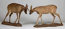 DEUX CHEVREUILS se faisant face en position de lutte, sur des socles naturalistes. 72 x 122 cm et 79 x 139 cm. Chevreuil Capreolus c...