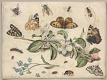 Jan van Kessel l'Ancien Anvers, 1626 - 1679 Composition aux papillons et fleurs Gouache sur vélin