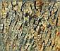 Jacques GERMAIN (1915-2001) COMPOSITION, 1961 Huile sur toile