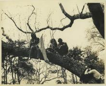 Agfa Print Photo Hippies Protect a Tree by Having a Sitin, 1966