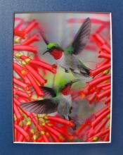 Hummingbirds Color Lenticular 3-d Hologram Art Amazing Picture!