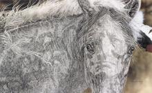Judy Larson - Red Horse